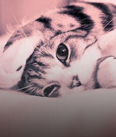Las ventajas de adoptar un gato vs un chico